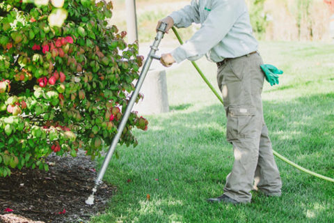 tree-aeration-fertilization